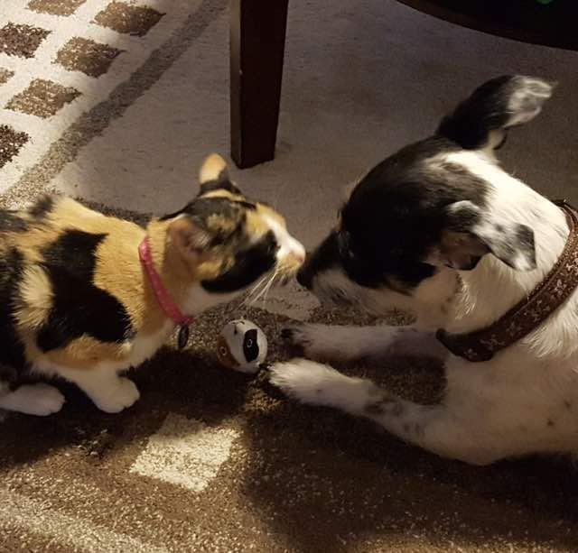 犬と猫とオモチャ