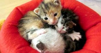 小さなベッドと子猫