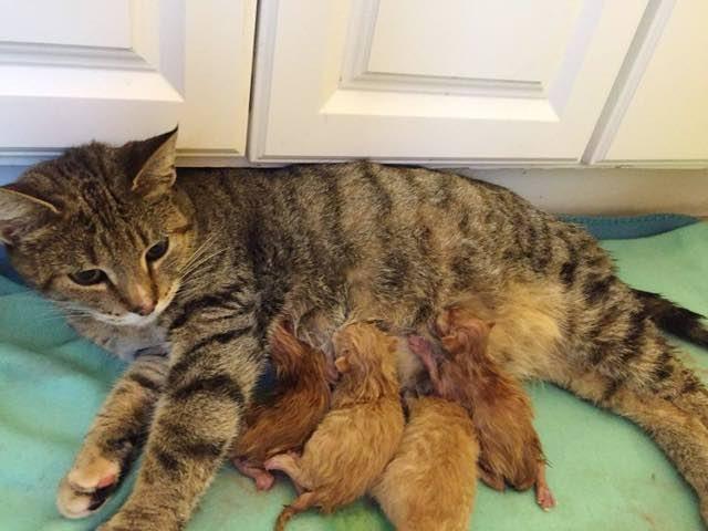 ミルクを飲ませる母猫