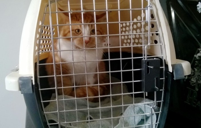 ケージの中の猫