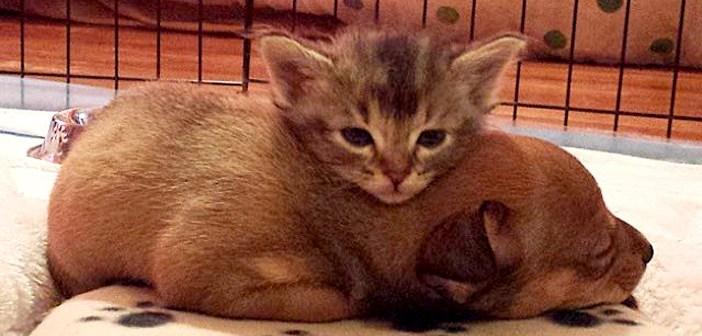 保護された子猫と子犬