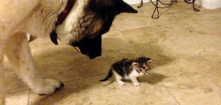見られる子猫