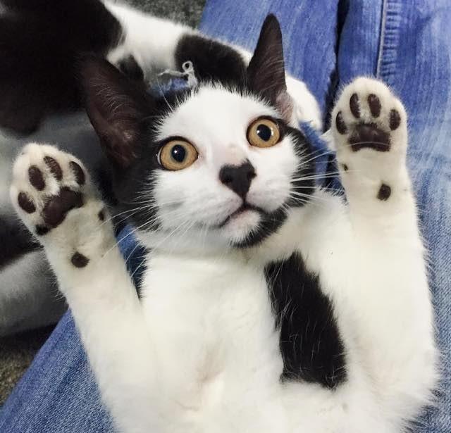 鼻にハートマークがある猫