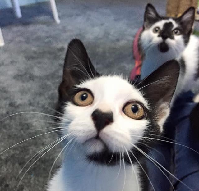 鼻にハートマークのある子猫