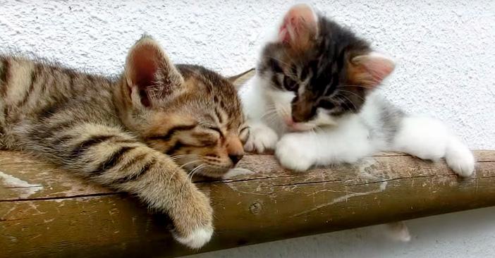 起きるのを待つ子猫