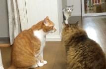ケンカを目撃した猫