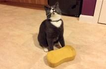 スポンジを持ち帰る猫