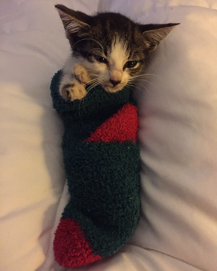 靴下の中の子猫