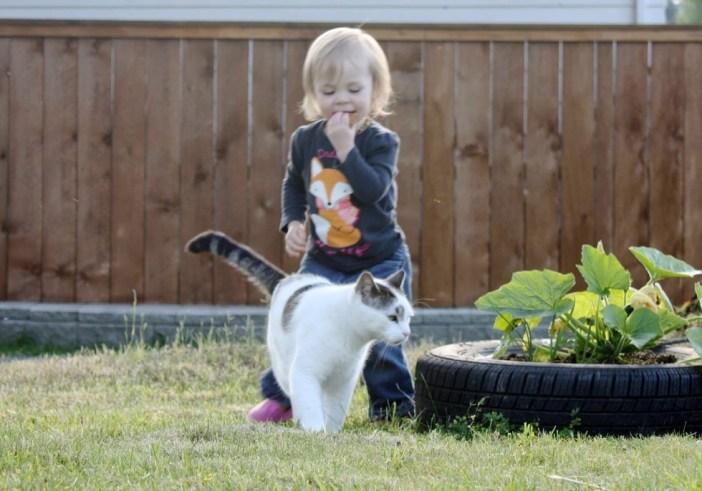 いつも一緒の猫と女の子