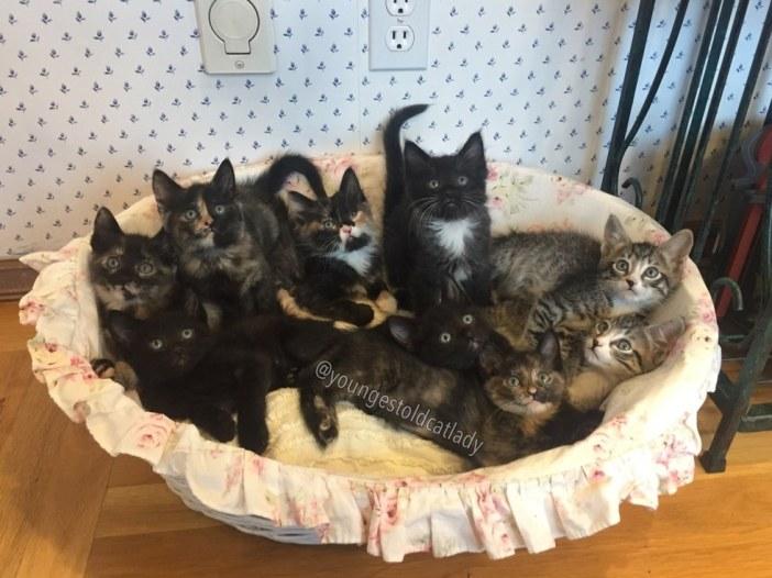 愛らしい子猫たち