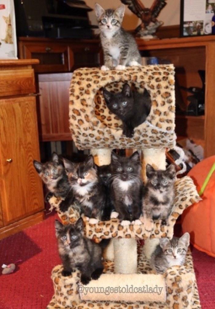 キャットタワーと子猫