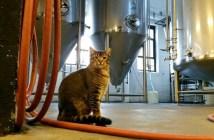 ビール工場で働く猫