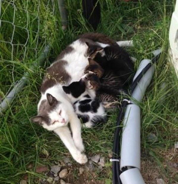 子猫に授乳する母猫