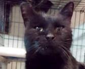 -17度の寒さの中、高速道路脇で助け出された迷子の猫。1年4ヶ月ぶりに飼い主さんと再会すると… (6枚)
