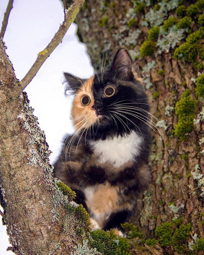 遠くを見る子猫