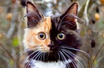 顔が半分黒い猫