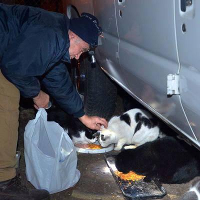 猫に餌をあげる男性