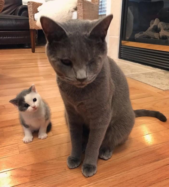 覗き見する子猫