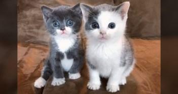 保護された2匹の子猫