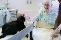 猫と患者さん