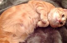 妊娠中の母猫