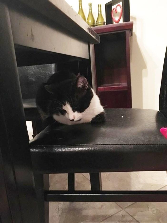 家の中の猫
