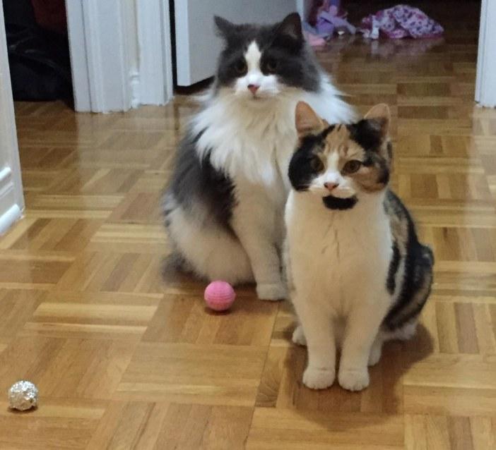 お座りする猫達