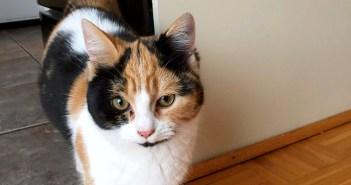 家暮らしを始めた猫