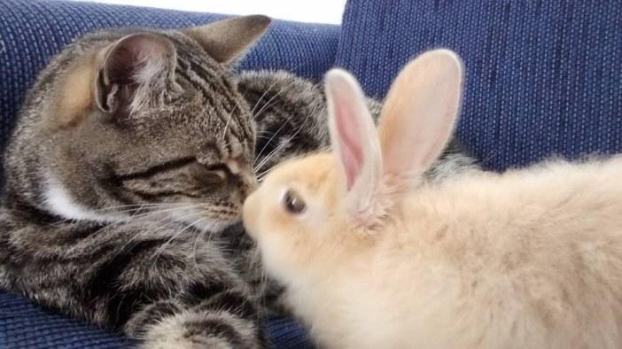 仲良しね猫とウサギ