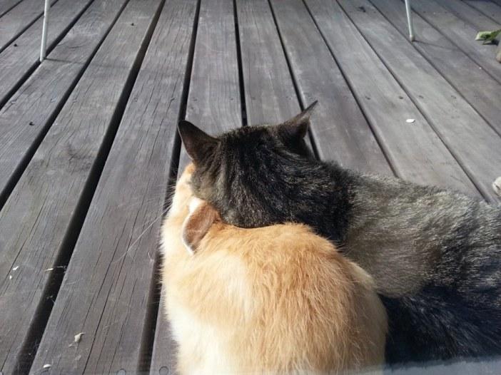 ウサギを枕にする猫