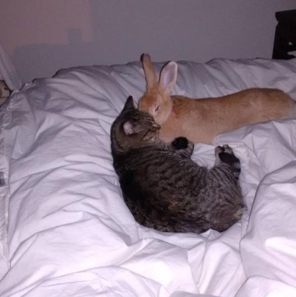 寝るときも一緒の猫とウサギ