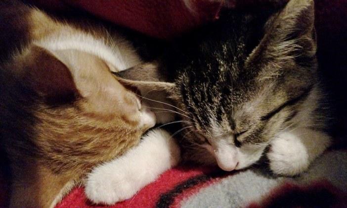 気持ちよさそうに眠る子猫達
