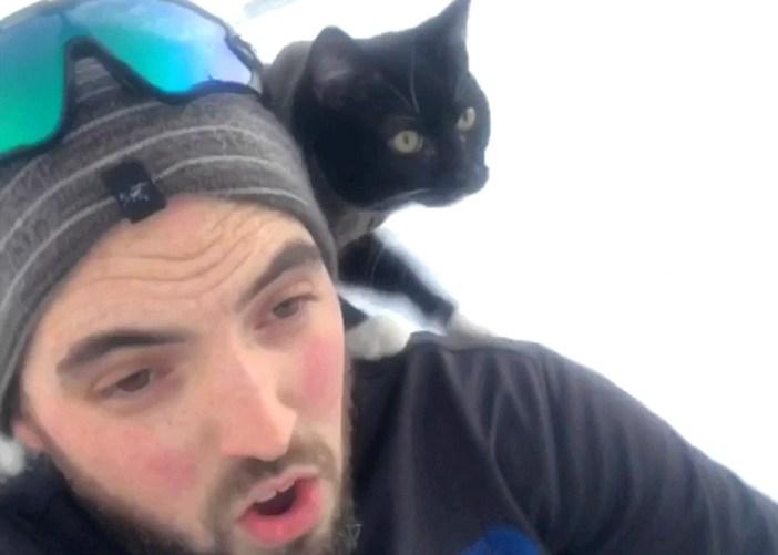 ソリを楽しむ猫