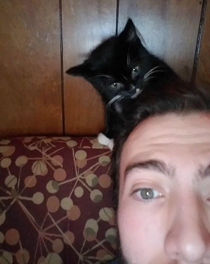 頭をいじる子猫
