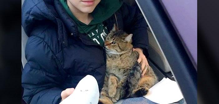 猫を助けた少年