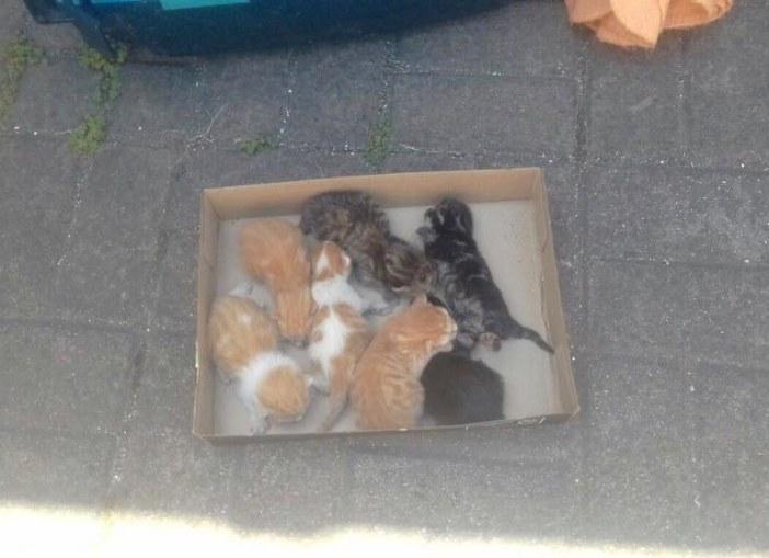 箱に入る子猫達