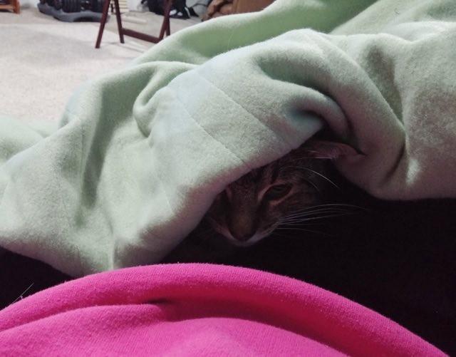 布団の中に入る猫