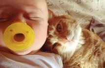 赤ちゃんに寄り添う猫