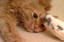 猫と友達のインコ