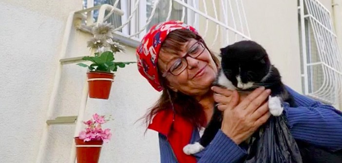 猫のためにはしごをかけた女性