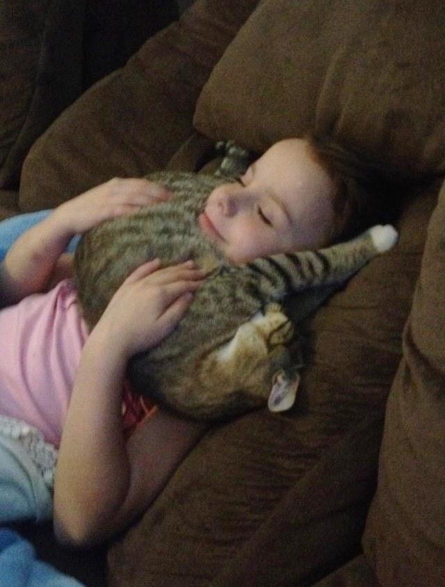 女の子に抱っこれる子猫
