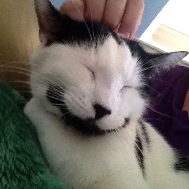 いい顔のヒゲ猫