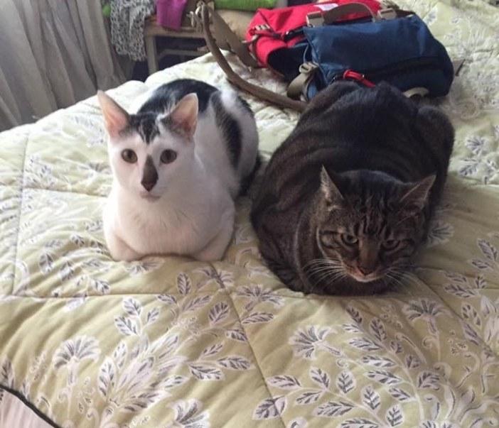 ベッドを楽しむ猫