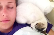 肩で寝る子猫