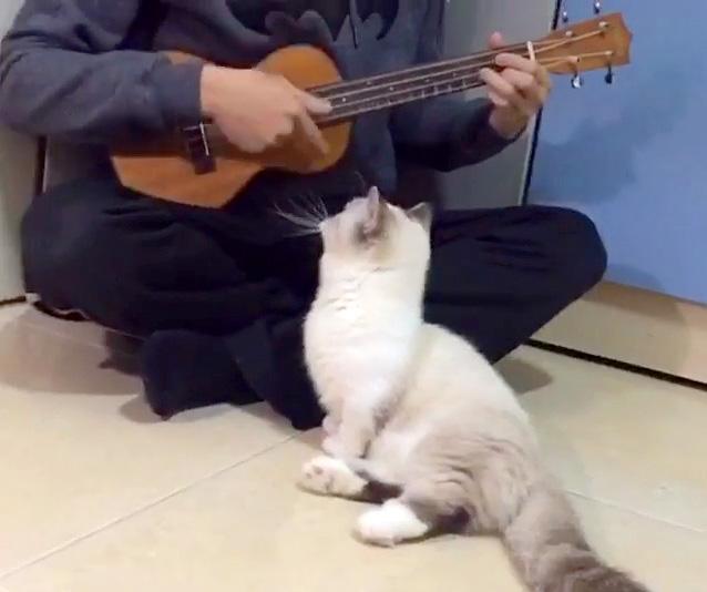 ウクレレの演奏を聴く猫