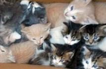 助け出された子猫達