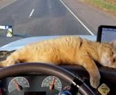 荷運び中のトラックから姿を消した愛猫。車体の下にしがみつき、640km先でまさかの再会! (4枚)