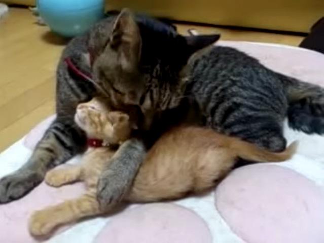 子猫をペロペロ