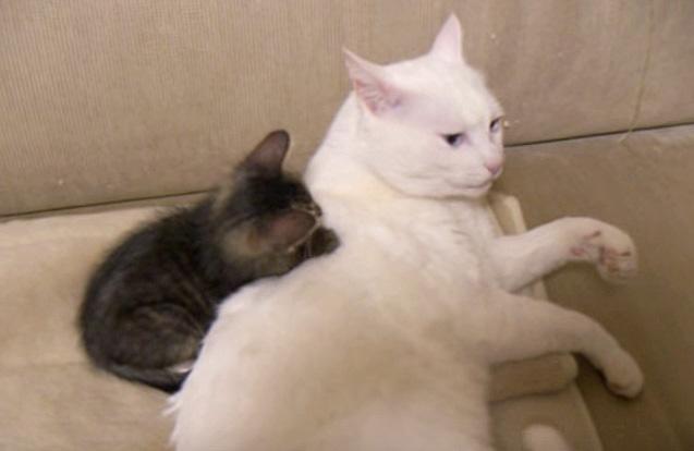 かまって欲しい子猫