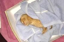 ゴミ箱で鳴いていた子猫
